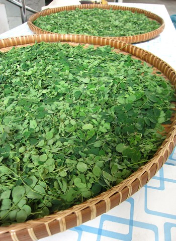 Fresh Moringa Leaf