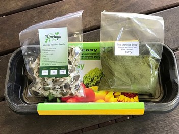 Moringa Growing Kit